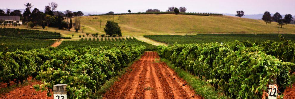 australian wine region new south wales scaled 992x334 1